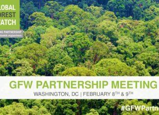 RDC : 1.22 Million d'hectares de forêt naturelle perdus en 2019, selon Global Forest Watch