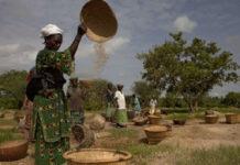 insécurité alimentaire et nutritionnelle au Niger
