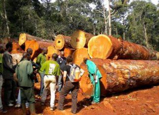 Exploitation forestière au Cameroun : Un nouveau système pour contrôler le marché du bois